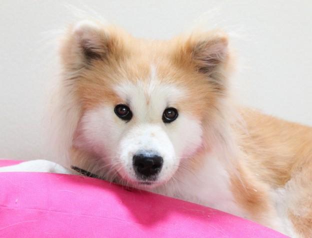 hondenbed honden kussen review