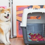 reis-bench-hond-vliegtuig