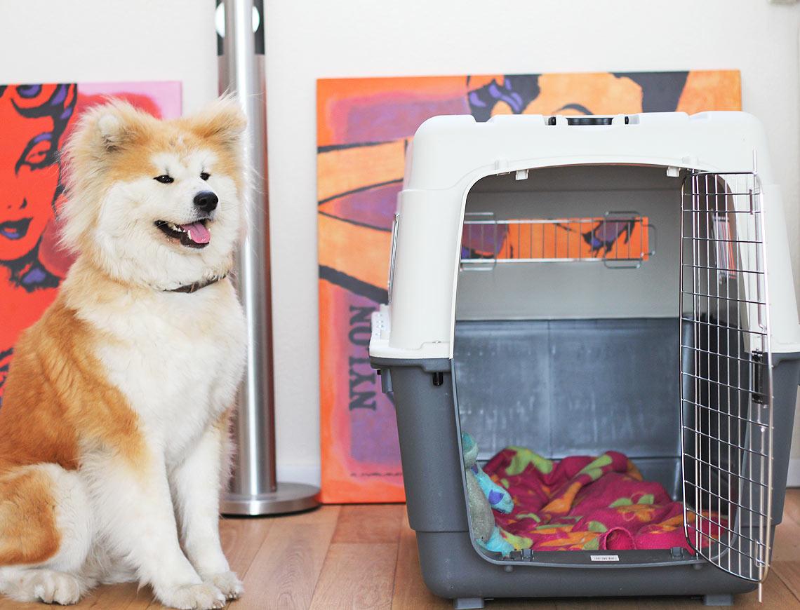 Reisbench hond vliegtuig