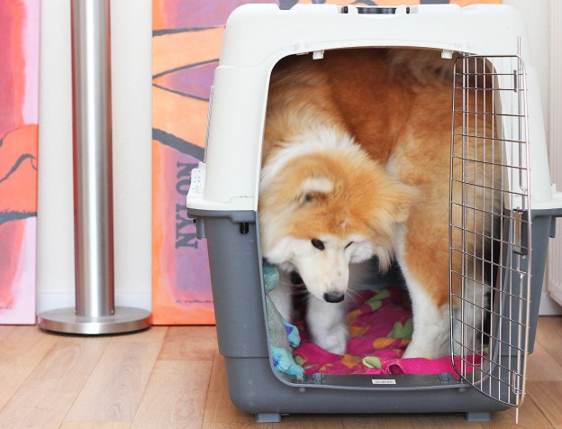 reis-bench-vliegtuig-hond