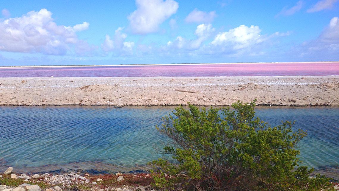 roze water bonaire