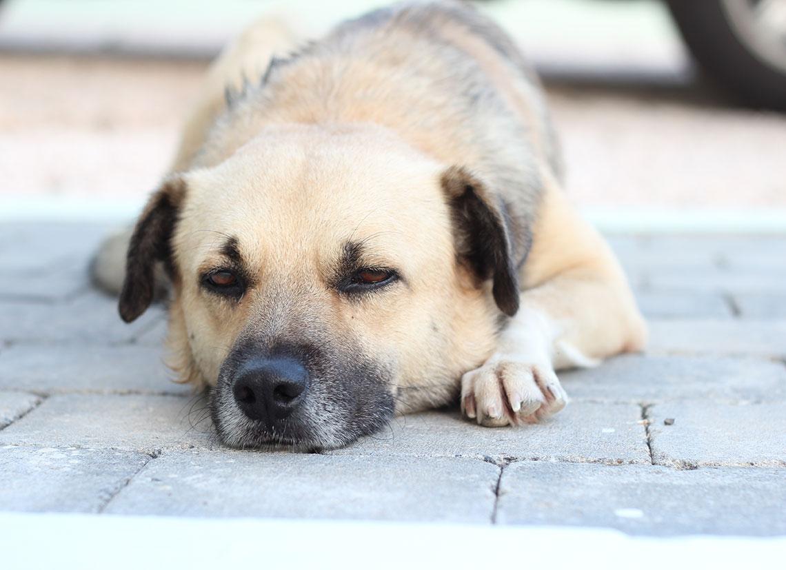 hond uit asiel op Curacao