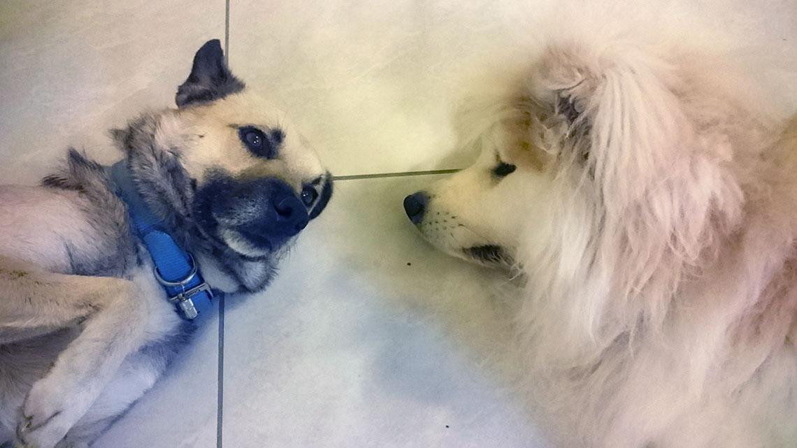 honden-curacao