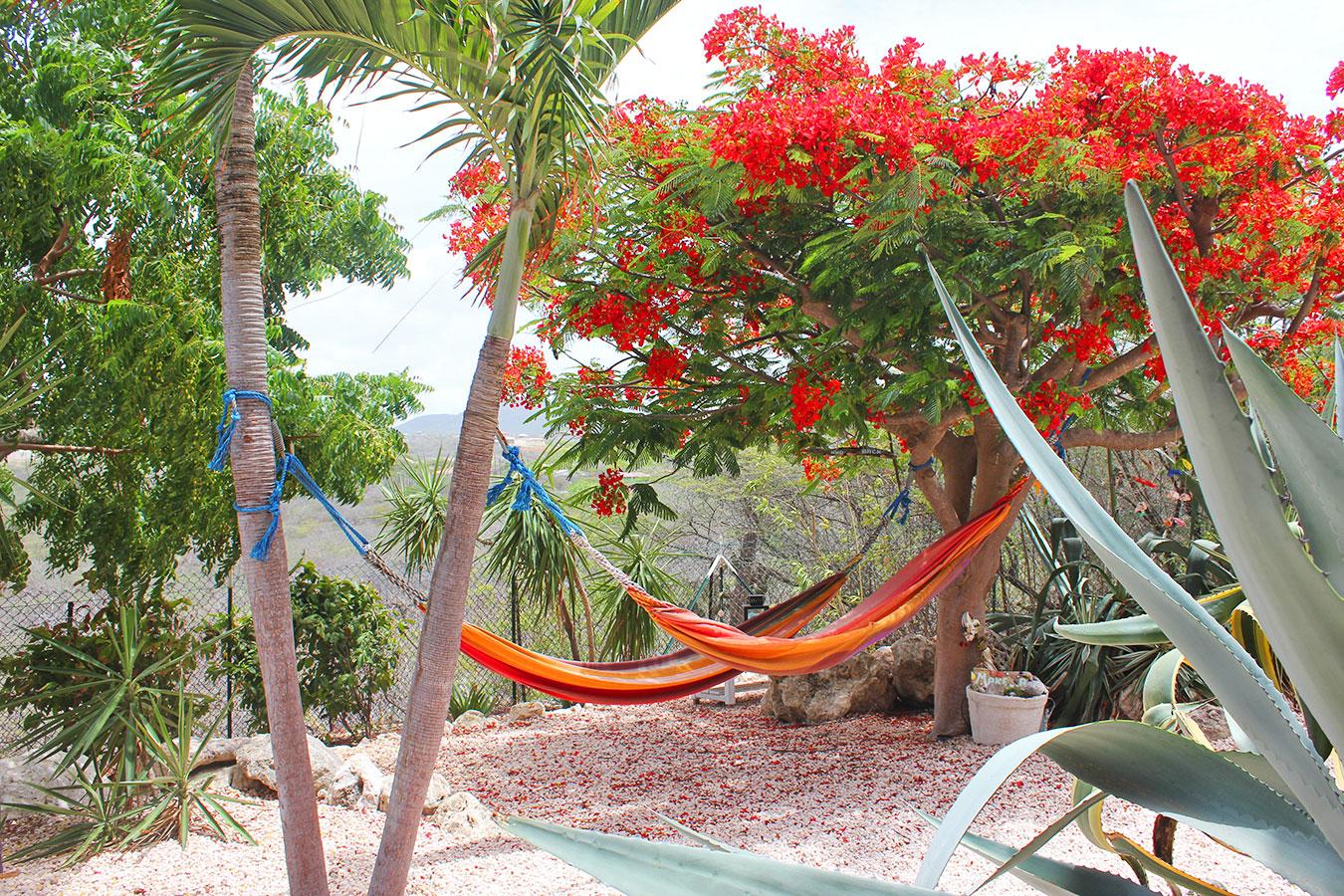 Vakantie appartement op Curacao | Bandabou / westpunt / midden in de natuur.
