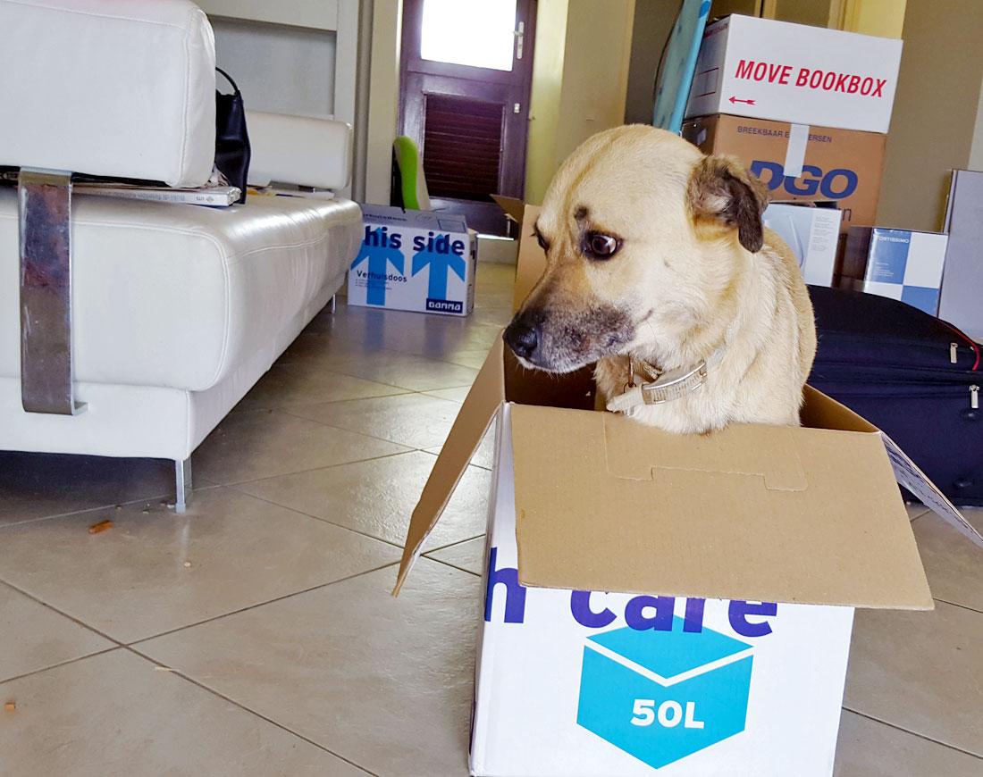 verhuizen-curacao