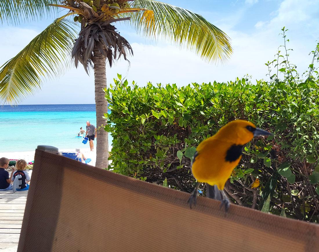 vogel-curacao-strand