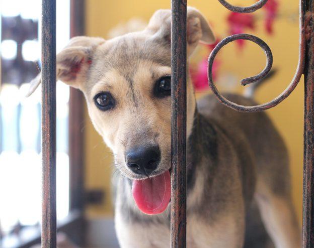 westpointer Curacao | straathonden