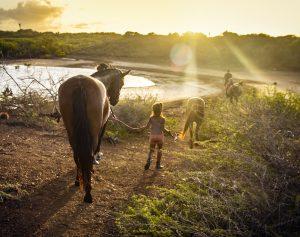 zwemmen met paarden